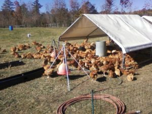 Cover photo for Backyard Poultry Symposium
